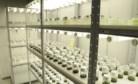Laboratório de Biotecnologia Vegetal