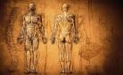 Imagem Referência do Curso Técnicas de Dissecação e Preparo de Peças para Estudo da Anatomia Humana – 2ª Edição