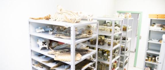 Laboratório de Zoologia e Coleção